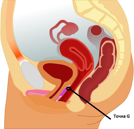 Женское влагалище большой оргазм бабло